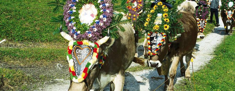 Foto: beschmückte Esel