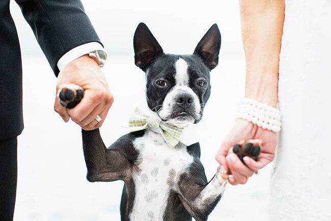 Pets in Weddings