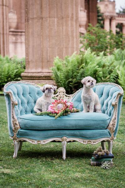 Las mascotas en la boda.