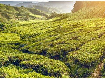 Malaisie, terre de beautés spectaculaires pour votre lune de miel