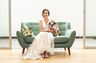 ¡Mascotas en la boda! Descubre cómo incluir a tus engreídos en este día especial