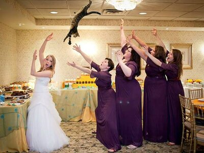 A new wedding tradition: Bou-cats instead of bouquets!!