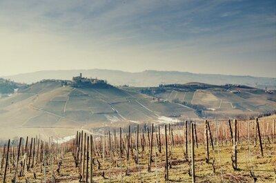 Wine weekends and vineyard honeymoons with Wine Passport!