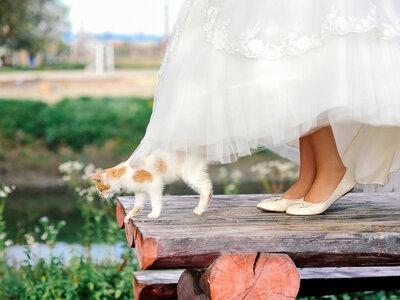 Frau heiratet ihre Katze: Schweizer Gerichte erlauben seit dieser Woche Eheschließung zwischen Mensch und Tier