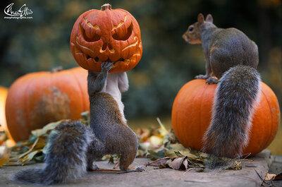 ¡Halloweddings! Bodas al estilo Halloween