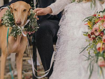 Cães no casamento: 10 ideias para incluir o seu melhor amigo no grande dia!