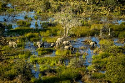 Медовый месяц в Ботсване: сокровище, сокрытое в глубине Африки!