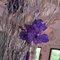 Le violet a toujours beaucoup d'allure et de cachet
