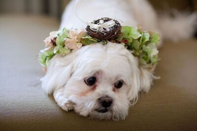 Dogs make the best ring bearers! Check out how you can incorporate your dog into your wedding day!