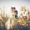 I raggi del sole - Lucia Pulvirenti Wedding Photographer