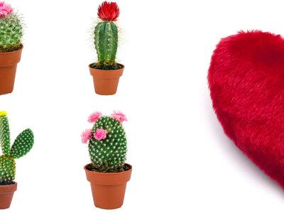 Najgorsze prezenty Walentynkowe, jakie możecie otrzymać (lub podarować!). Sprawdź ją!