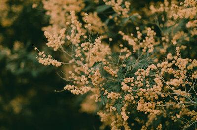 Silvestre e Boémio: um editorial inspirado na Floresta para noivas românticas