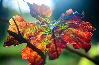 8 avantages à organiser votre mariage en automne, parole de pros !