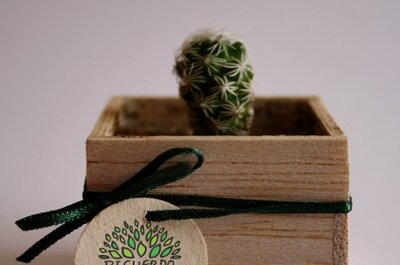 Regala cactus miniatura el día de tu boda