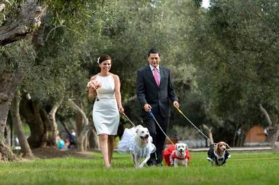 ¿Cómo celebrar un matrimonio con mascotas sin que resulte un desastre?
