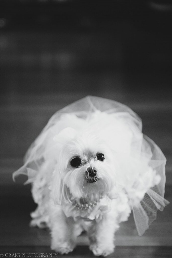 6 Tips para incluir a tu mascota en la boda - Craig Photography