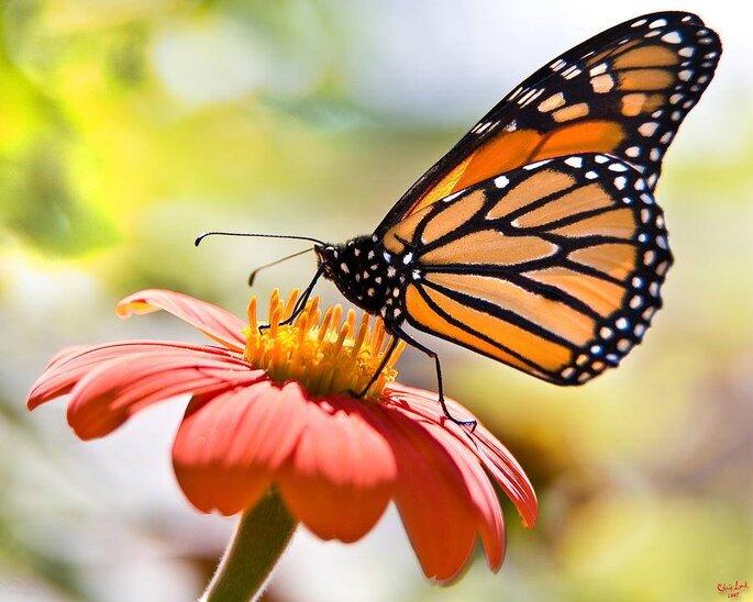 Foto: Reserva de la Biósfera de la mariposa monarca Facebook