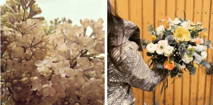 Photo : Fleurs de mars