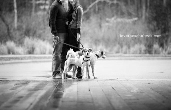 Diviértete y deja que tus perros hagan poses divertidas en la sesión de fotos - Foto Cheyenne Schultz Photography