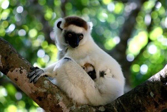 Voyage de noces Madagascar