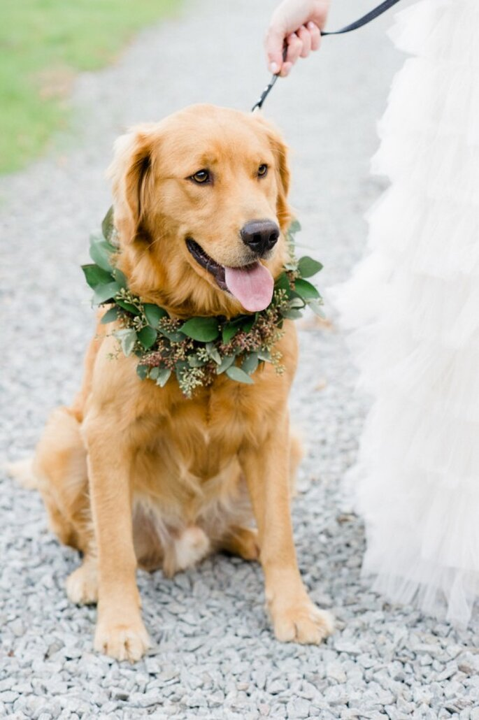 6 tips para incluir a tu mascota en la boda - Caroline Lima Photography