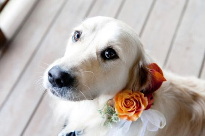 Perros pajesitos de boda. Foto de Orchard Cove Photography en Style Me Pretty