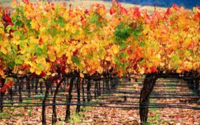 Los hermosos colores de las bodas de otoño