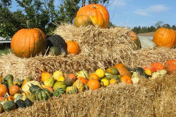 Kürbisse sind eine herrliche Hochzeitsdekoration für eine Herbsthochzeit. Foto: Stefan Schwarz_pixelio.de