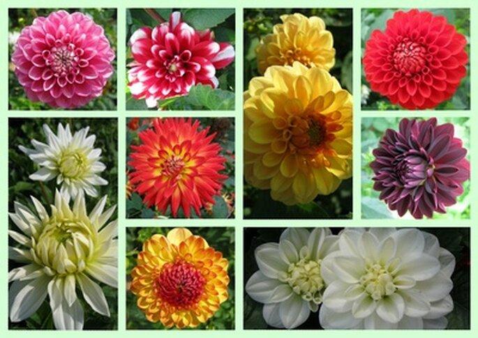 prachtvolle Farben sind als Blumen und Textilien auf der Hochzeit Grund Motive