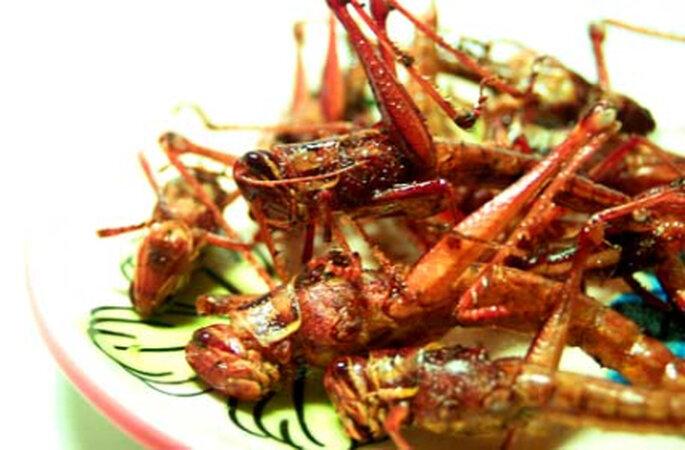 Exotische Unternehmung: Insekten-Kochkurs