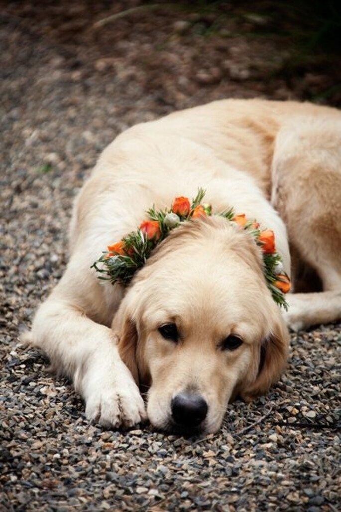 Perros pajecitos de boda. Foto de Catherine Hall Studios en Style Me Pretty