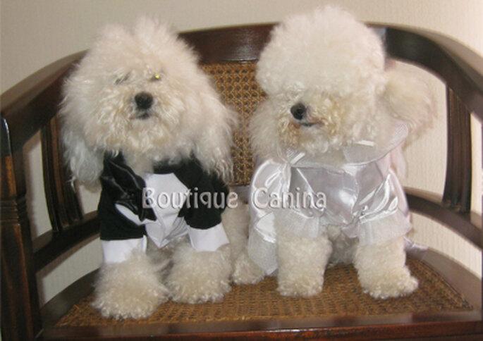 En Boutique Canina hacen ropa a la medida para tus mascotas.