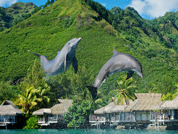 Foto: InterContinental Moorea Resort & Spa