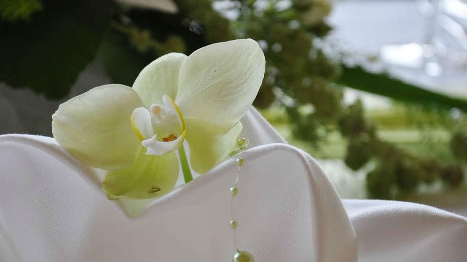 Beispiel: Orchidee als Tischschmuck, Foto: Blumen Isabella.