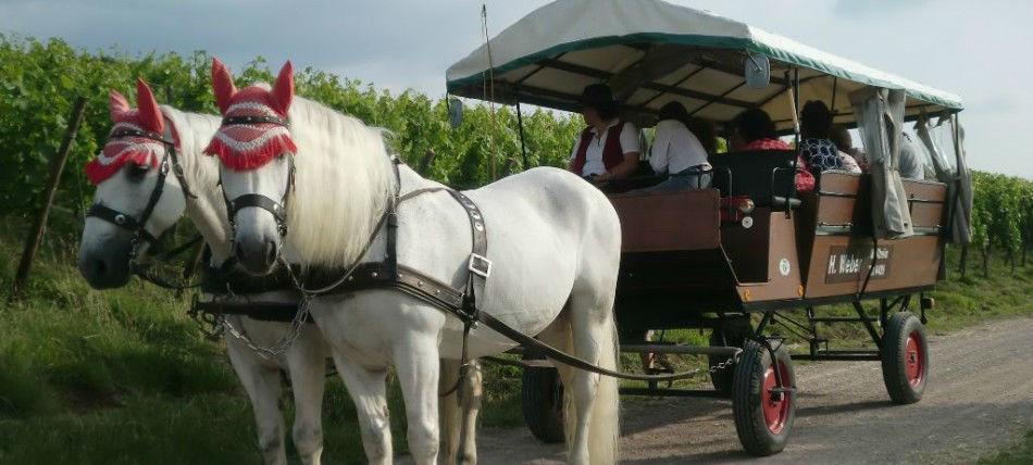 Beispiel: Planwagen für die Hochzeitsgesellschaft, Foto: Kutschfahrten Weber.