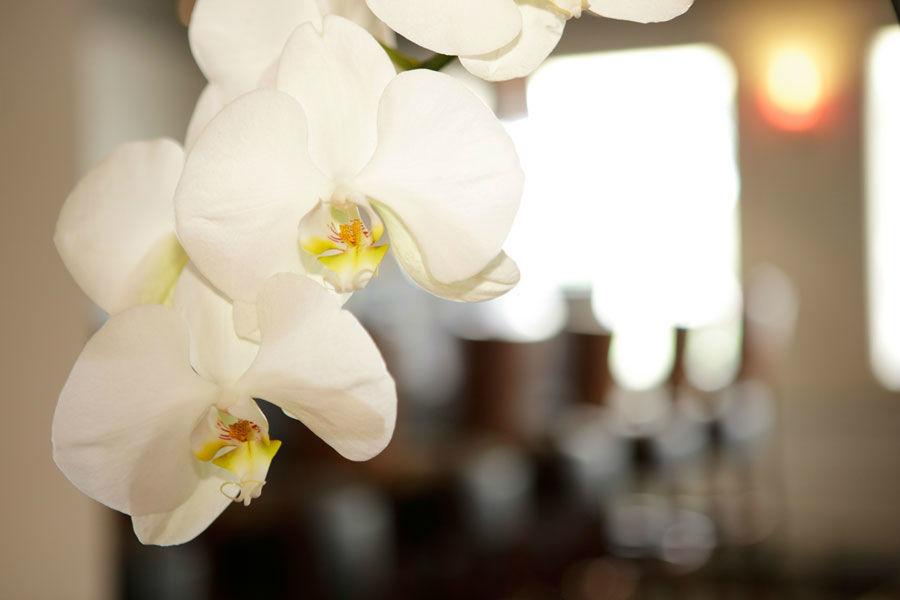 Beispiel: Orchideen für die Braut, Foto: Bären Sigriswil.