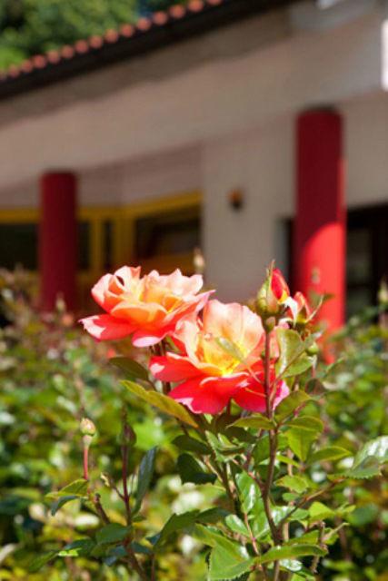 Beispiel: Flora, Foto: Luckner Parkrestaurant.