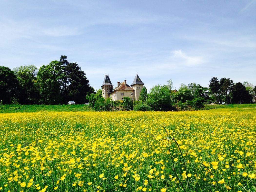 Château - champs