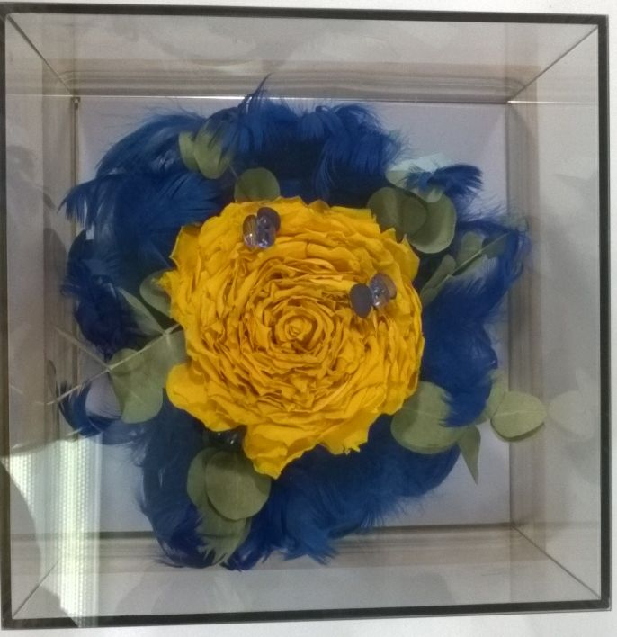 Rosamelia z żółtych róż i eukaliptusa w kryzie z niebieskich piór