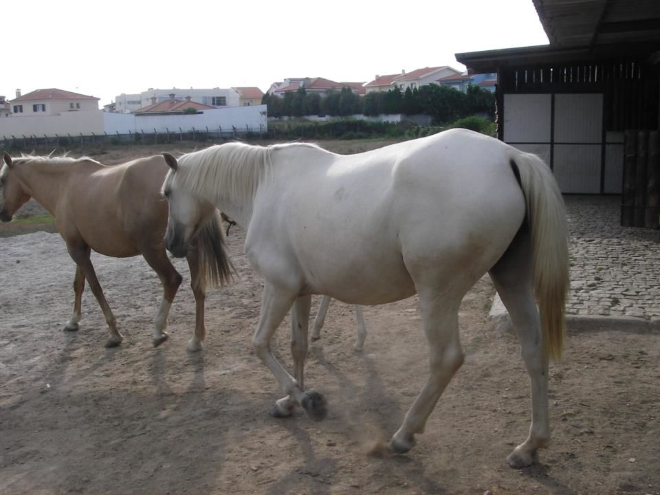 Espírito Equestre