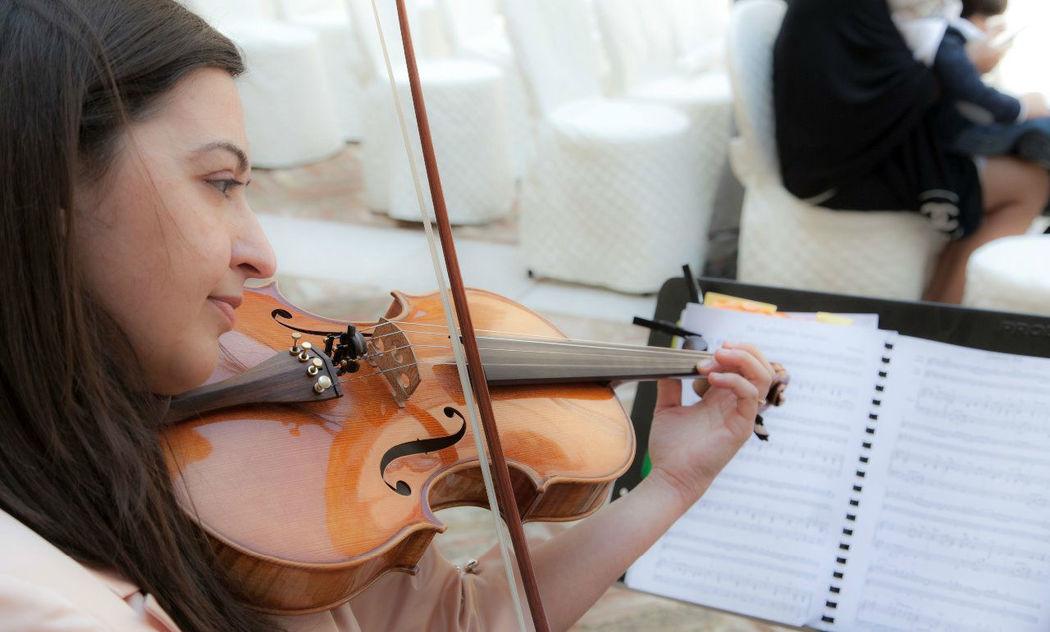 viola solista