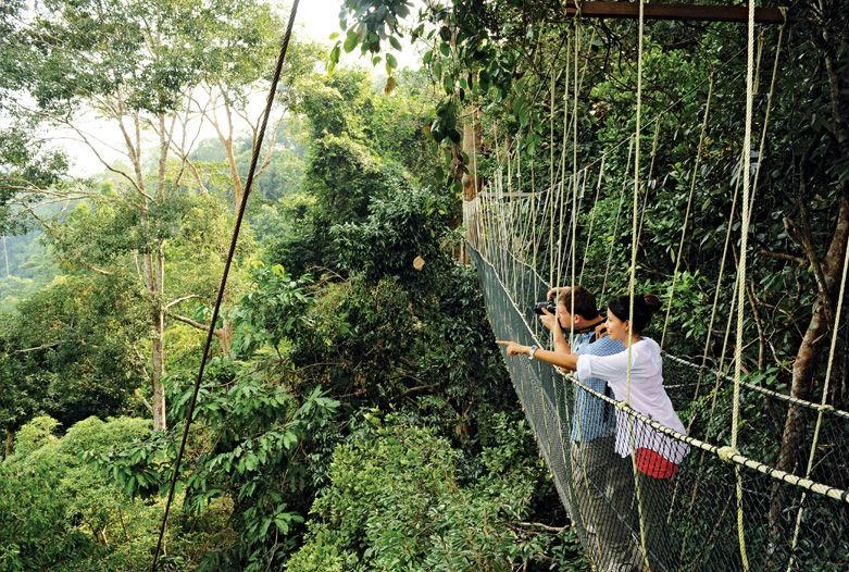 Canopy Walk en Taman Negara, Malasia