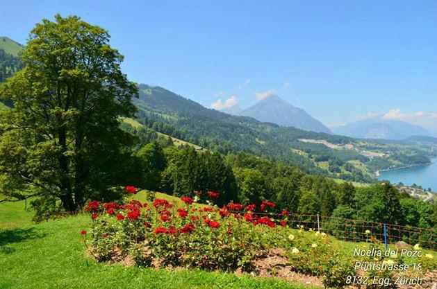 Beispiel: Blick auf den See und die Berge vom Garten aus, Foto: Hotel Restaurant Meielisalp.