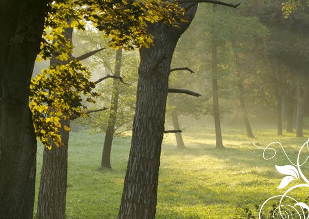 Beispiel: Wald, Foto: Jagdschloss Eckartsau.
