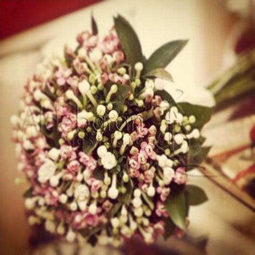 Bouquet de bouvardias en dos tonos