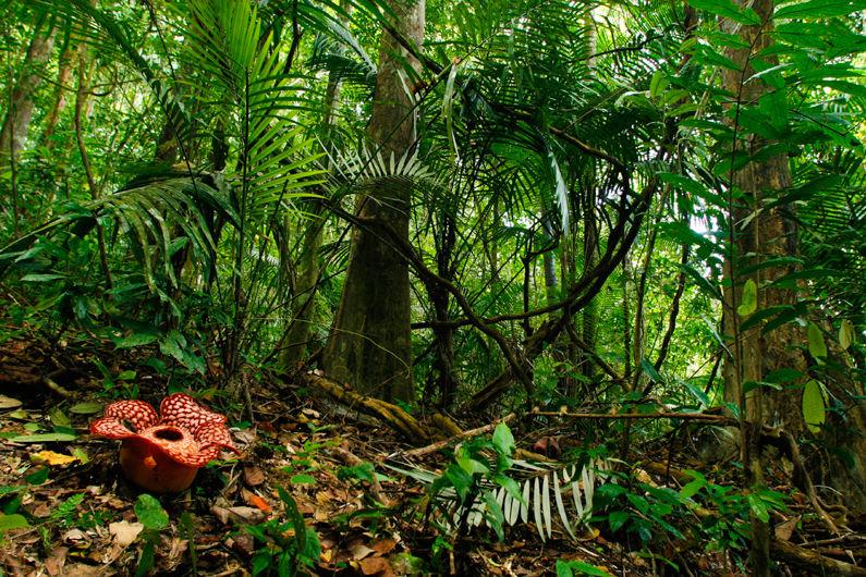 Belum Rainforest, Malaysia