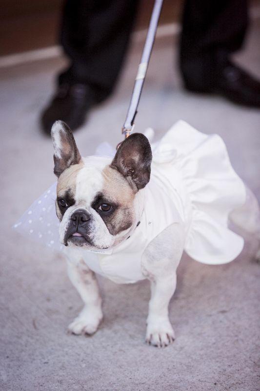 una pajecita muy especial  Wedding Planner: Lina Vargas Producción Decoración : Lica Creativa  fotografía : Maria Luisa Restrepo
