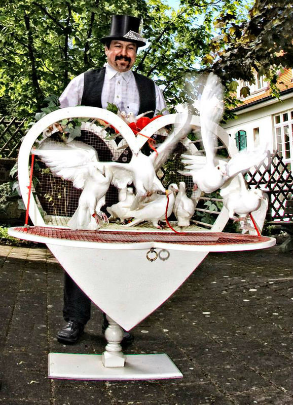 Beispiel: Hochzeitstauben, Foto: Stefans Hochzeitstauben.