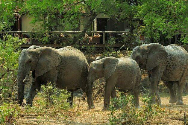 Sudafrica  - Parco Kruger -