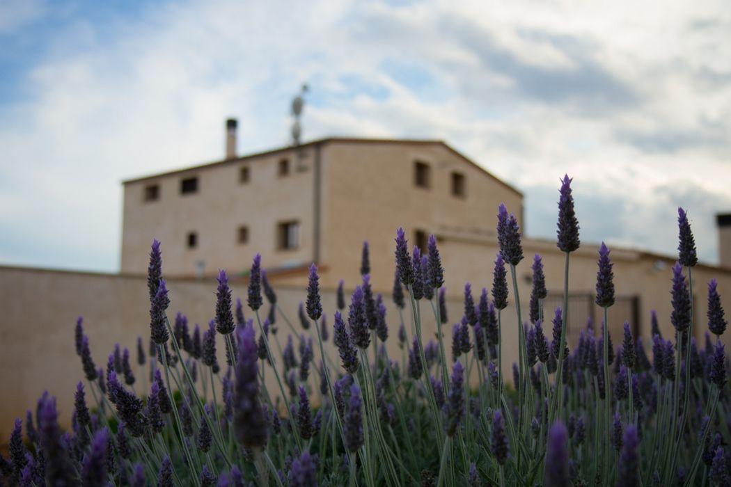 Mas Montbrió Belvedere